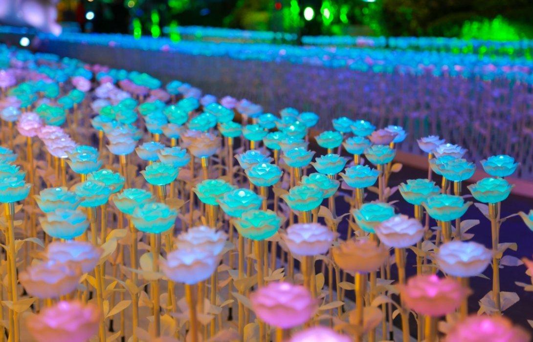 เดอะมอลล์ โคราช สร้างปรากฏการณ์ทุ่งดอกไม้ illumination นับหมื่นครั้งแรกในภาคอีสาน
