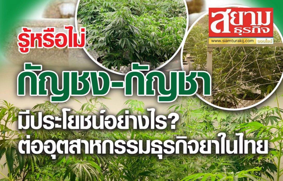 """รู้หรือไม่ """"กัญชง – กัญชา"""" มีประโยชน์อย่างไร ? ต่ออุตสาหกรรมธุรกิจยาในไทย"""