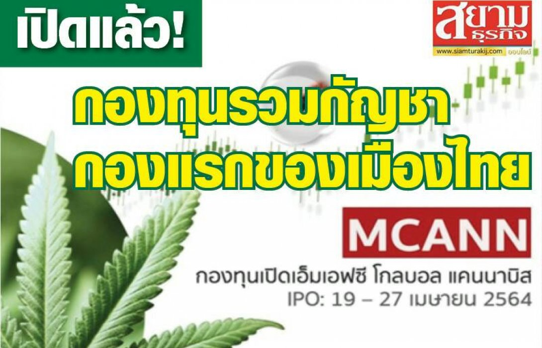เปิดแล้ว! กองทุนรวมกัญชากองแรกของเมืองไทย