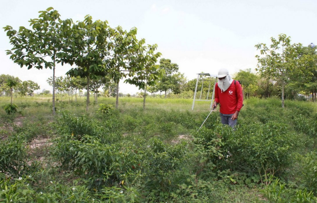 ชี้ข้อเท็จจริงพาราควอต  ... ยังคงเป็นทางเลือกที่ดีที่สุดของเกษตรกร