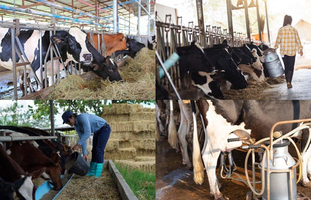 """""""โฟร์โมสต์"""" ชี้ต้นทุนนมนอกต่ำกว่านมไทย 35-50% เร่งปรับตัวก่อนเปิด FTA แดนจิงโจ้-กีวี่ ปี 64 พร้อมเพิ่มศักยภาพเกษตรกรโคนมเพื่อการแข่งขันยั่งยืน"""