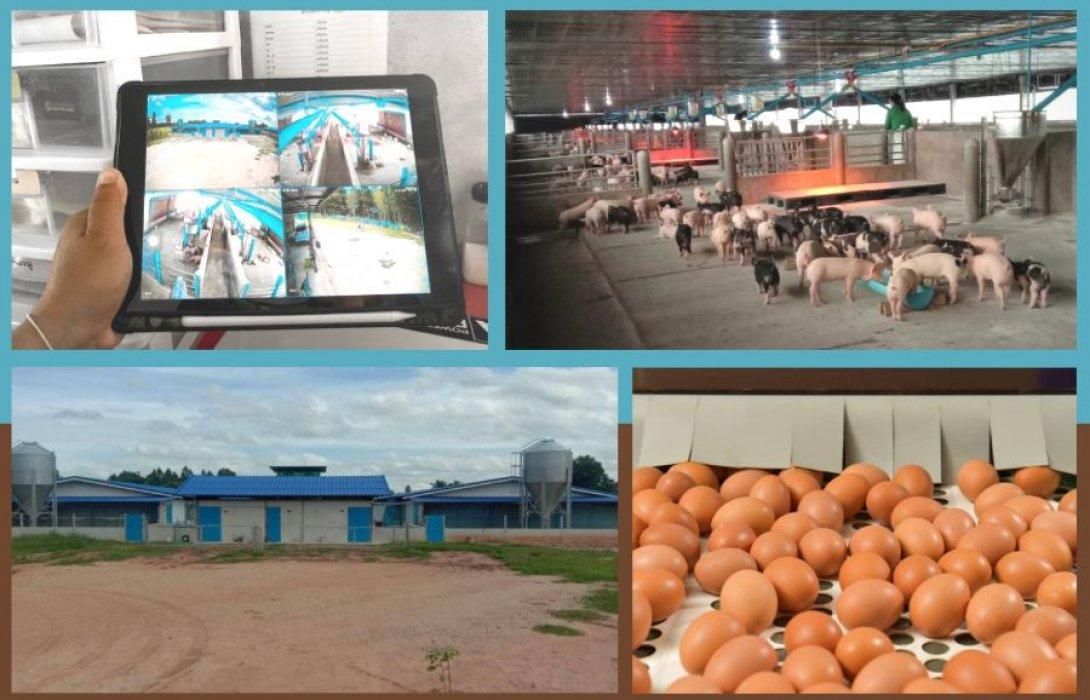 """""""ซีพีเอฟ"""" มุ่งดูแลเกษตรกรคอนแทรคฟาร์ม แบ่งปันองค์ความรู้มาตรการป้องกันโรคโควิด-19 และโรคสำคัญในสัตว์"""